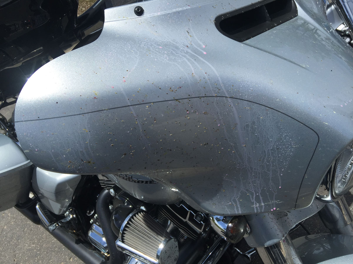 Spray the bugs with Dirty Biker - Quick Detailer and let it soak for 1-5 min.